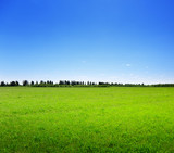 field of spring grass and forest