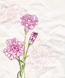 Sketch carnation flower