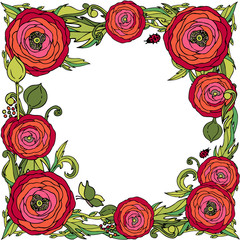 Red ranunculus-rose flowers vector frame