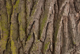 Texture of the trunk of an old tree covered