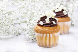 Chocolate cupcakes for wedding party. Baby's breath flower