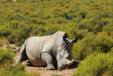 Rhinoceros in Kruger National Park, South Africa.