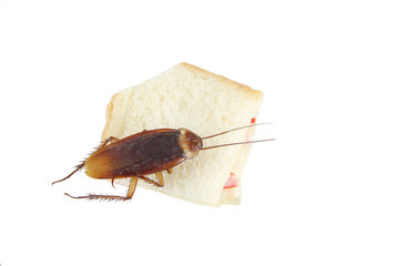 Cockroach died after eating poison bread.