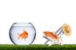 fish freedom concept
