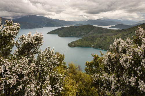 In de dag Nieuw Zeeland manuka trees above Queen Charlotte Sound