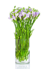 Lilac freesia flowers in the vase