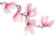 Leinwanddruck Bild - Pink spring magnolia flowers branch