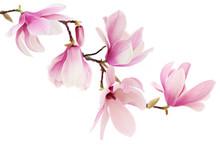 "Постер, картина, фотообои ""Pink spring magnolia flowers branch"""