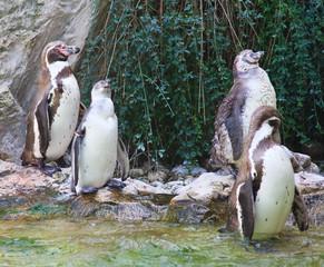 Penguins. Vienna Zoo. Austria