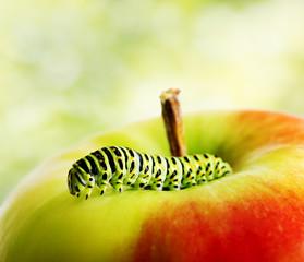 Green caterpillar on red apple
