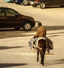 mule at the streets of Fez Medina, Morocco