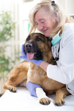 senior veterinarian hugging German Shepherd in the office