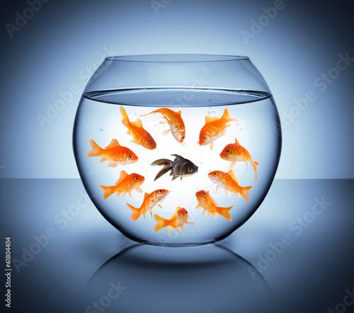 Leinwandbild Motiv black fish  - diversity  concept, racism and isolation