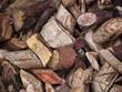 Wood Bark Medicine