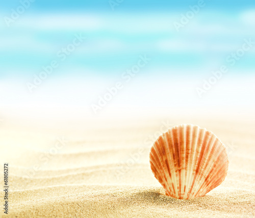 Shell on sandy beach