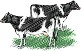 Holstein cow illustration