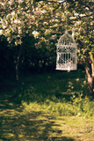 Birdcage In The Orchard