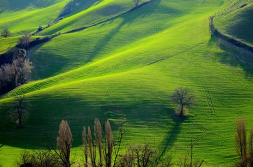 Colline verdi in campagna