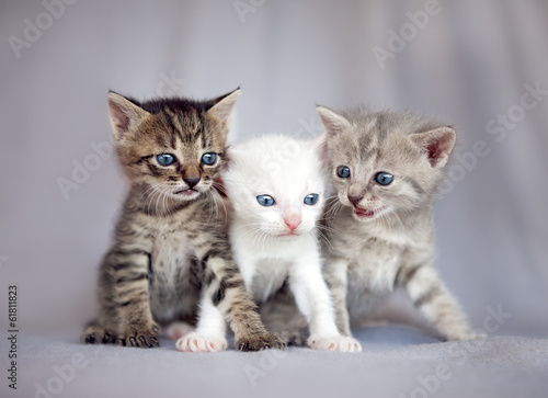 Group of young cats
