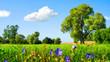 Idyllische Wiesenlandschaft bei schönstem Wetter
