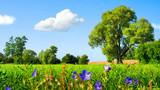 Fototapety Idyllische Wiesenlandschaft bei schönstem Wetter