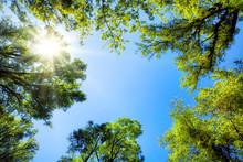 Drzewa oprawić słoneczne niebo