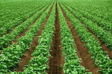 Ackerbau mit kräftigem Grün
