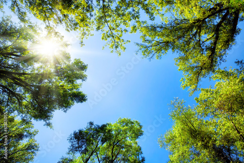 Leinwanddruck Bild Baumkronen umrahmen den sonnigen Himmel