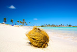 Coconut on the tropical white sand beach