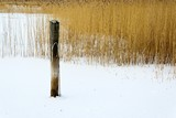 Pole in water with snow and reeds.