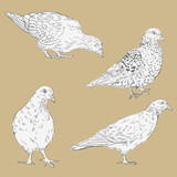 set of linear drawing doves