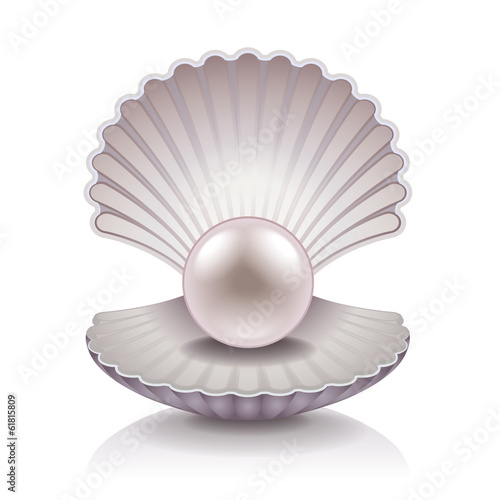 Shell with pearl vector illustration - 61815809