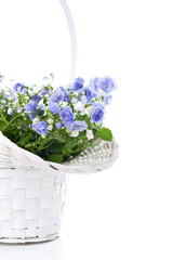 Bouquet of blue spring flowers in white basket