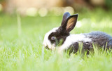 Rabit bunny in the grass