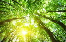drzew leśnych