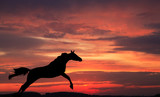 Silhouette of a horse in a jump against  sky on a sunset