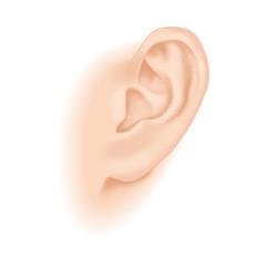 耳/耳つぼ