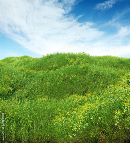 Spring meadow full of grass and flowers