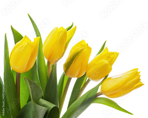 Fotobehang Tulp Flower bouquet from yellow tulips isolated on white background.