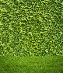 Grass on Hedge