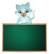A cat above the greenboard