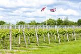 vineyar near Lamberhurst, Kent, England