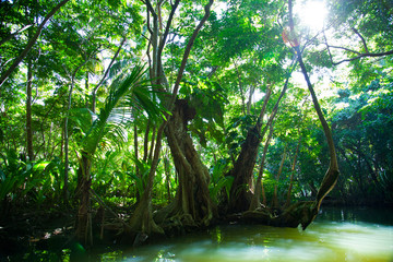 Lush green tropical vegetation alongside water