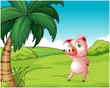 A pig near the coconut tree