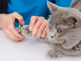 vet cutting cat toenails. isolated on white background poster