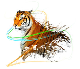 tiger splash with light trails