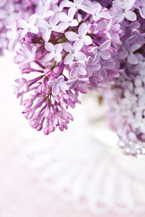Close up of beautiful lilac flowers