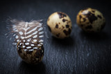 Easter still life with quail eggs