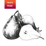 Fruits. Pear. Hand drawn illustration