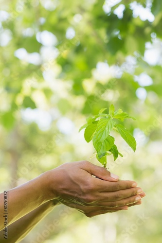 Close-up of hands holding young plant